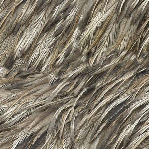 Feathers 33