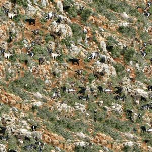 Mountain Goat Camouflage