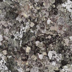 Lichen 24 Camo