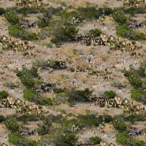 Desert Cactus Camouflage