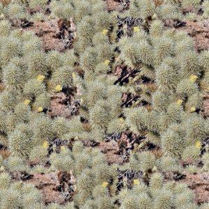 Desert Bear Camouflage