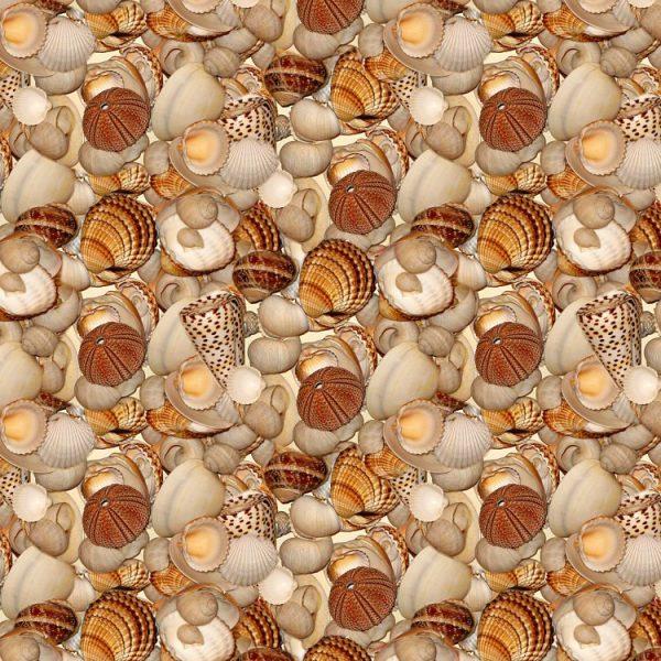 Seashells 27