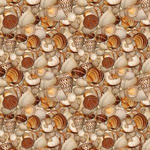 Seashells 26