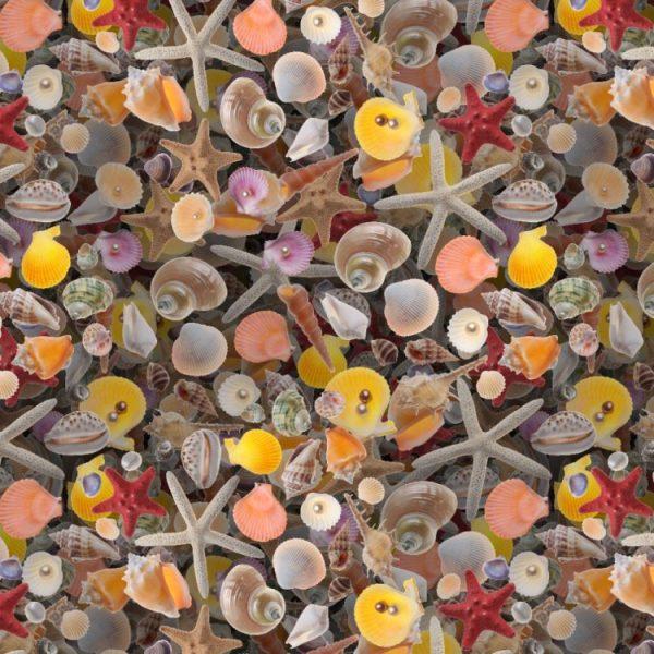 Seashells 22