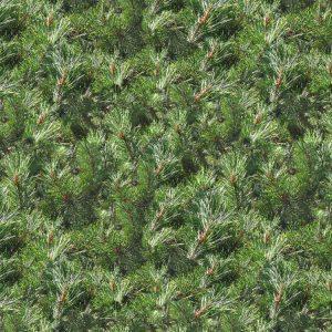 Pine Needles 24