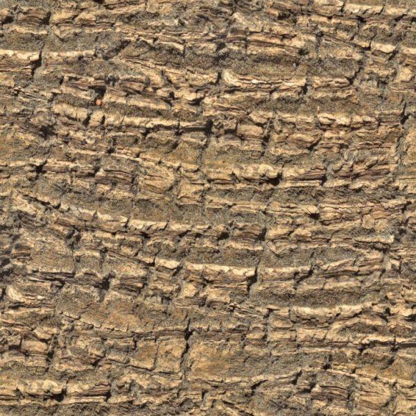 Palm Tree Bark 22