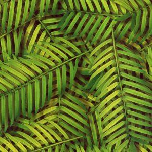 Palm Leaves 23
