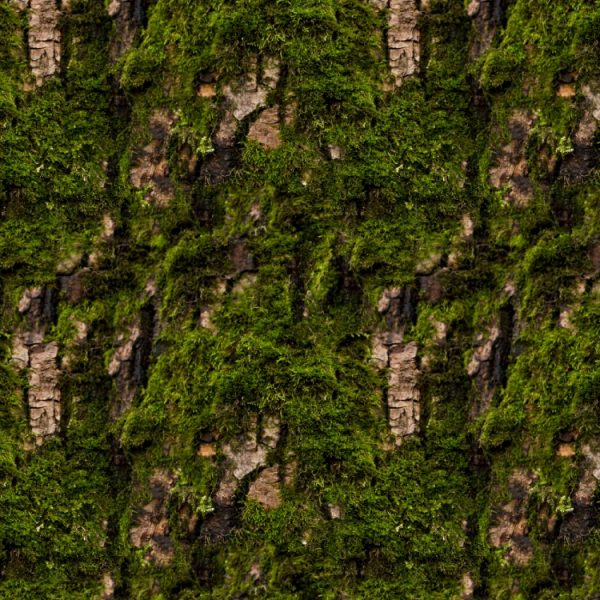 Mossy Bark 22