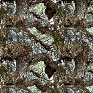 Mesquite Tree 23