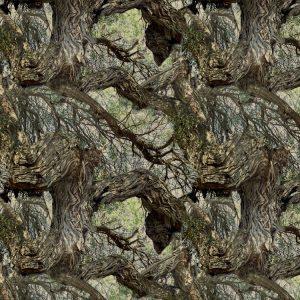 Mesquite Tree 22