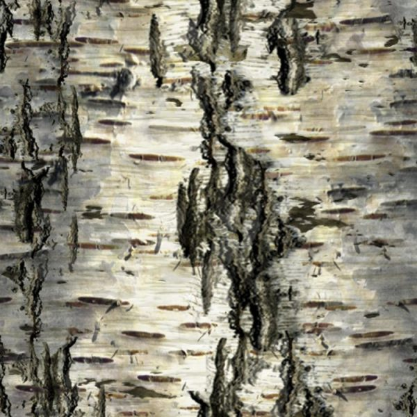 Birch Bark 30