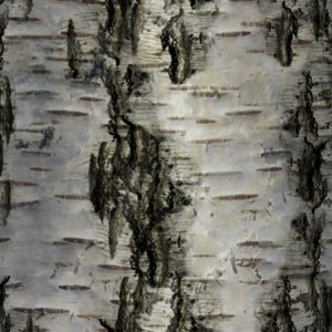 Birch Bark 29