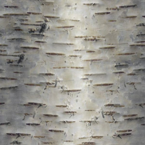 Birch Bark 28