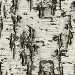 Birch Bark 27