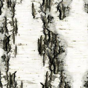 Birch Bark 21