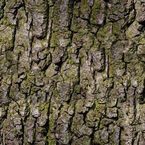 Bark 24 Camouflage