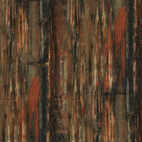 Petrified Wood 23