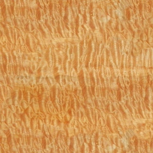 Curly Maple Woodgrain 23