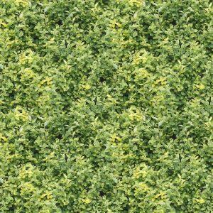 Hedge 24