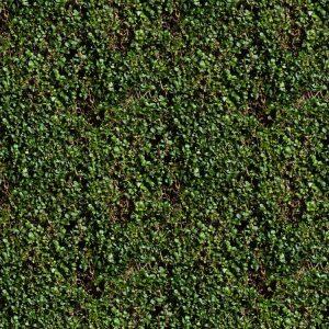 Hedge 22