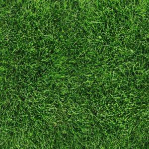 Grass 29