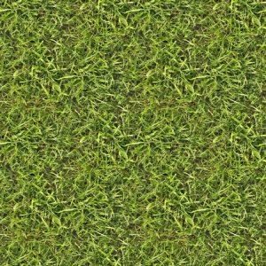 Grass 28