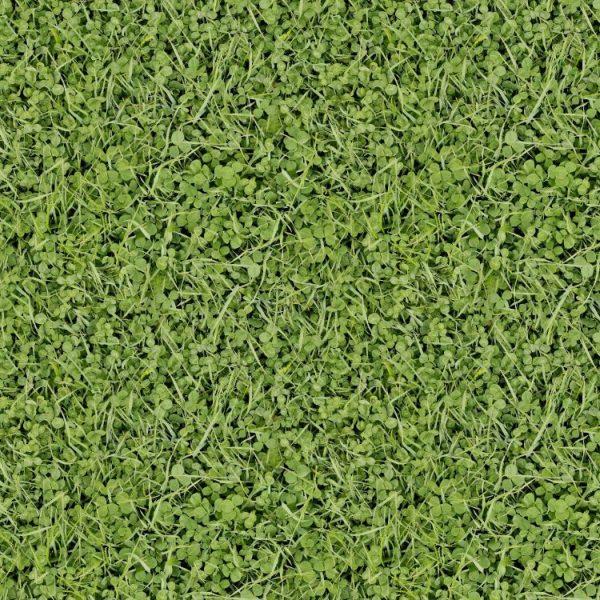 Grass 27
