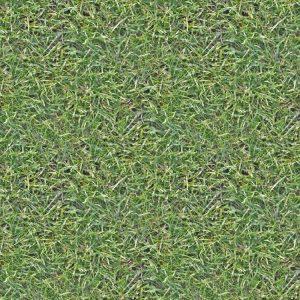 Grass 24