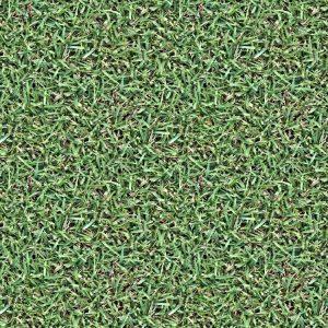 Grass 23