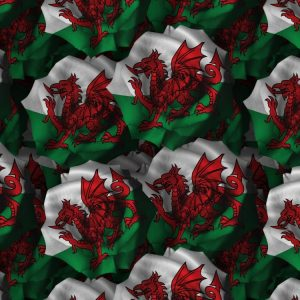 Welsh Flag Rose