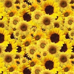 Sunflowers 23