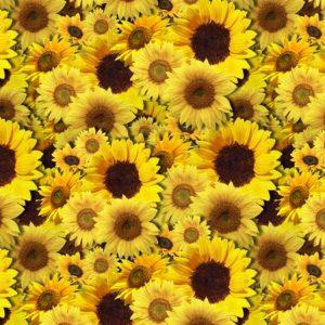 Sunflowers 22