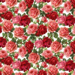 Roses 23