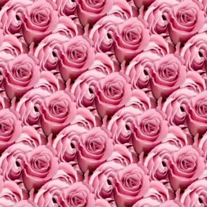 Pink Roses 22