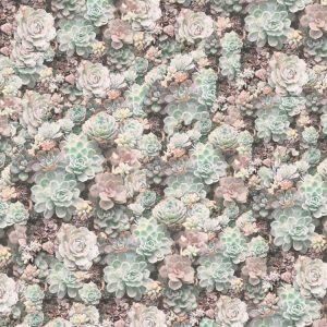 Cactus Flowers 22
