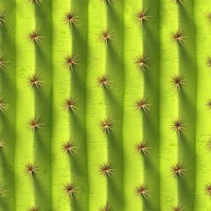 Cactus 24