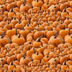 Pumpkins 22