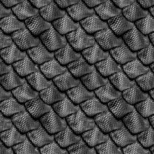 Dragon Scales 23