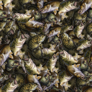 Mixed Fish Camo