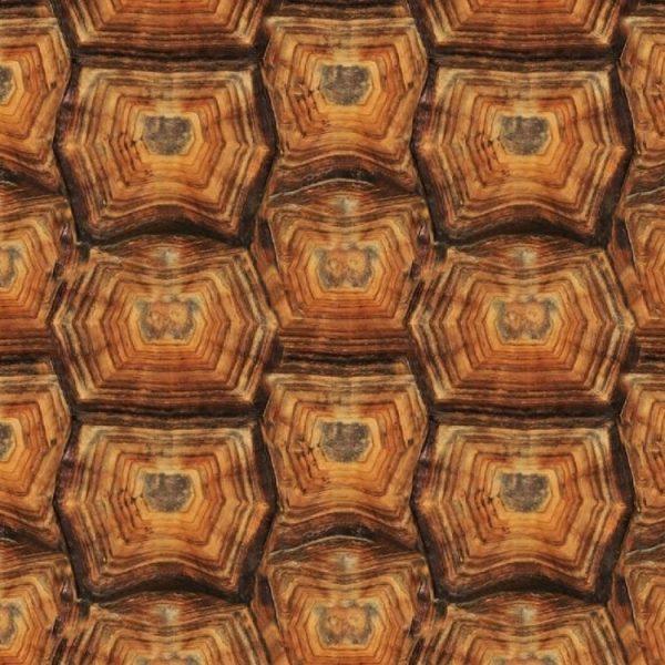Tortoise Shell 23