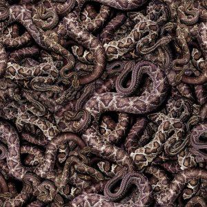 Snake Pit 24