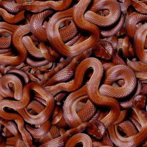 Snake Pit 22