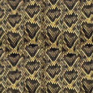 Diamondback Rattlesnake Skin