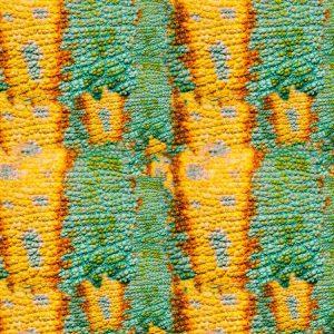 Chameleon Skin 24