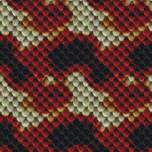 Blood Snake 22