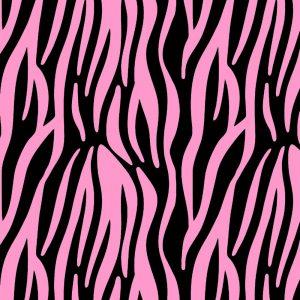 Zebra 24