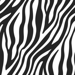Zebra 22