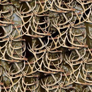 White Tail Deer Antlers 30