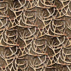 White Tail Deer Antlers 27