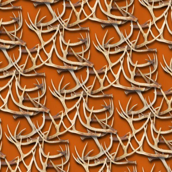 White Tail Deer Antlers 24